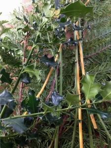 récolte de branches pour la couronne de l'avent