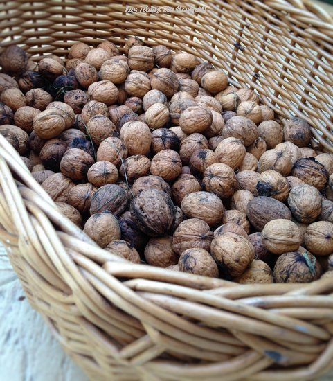 ramassage noix lesideesdusamedi.fr (Copier)