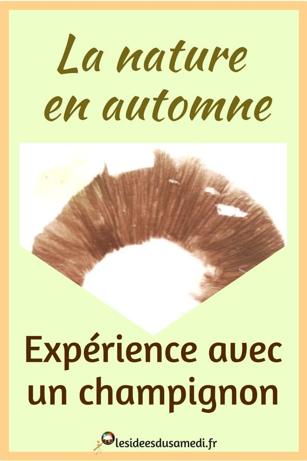 activite automne experience champignons