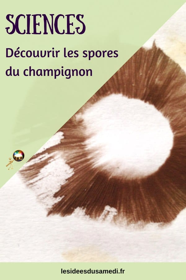 activite science automne champignon