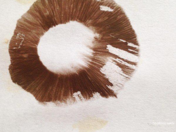 experience champignon