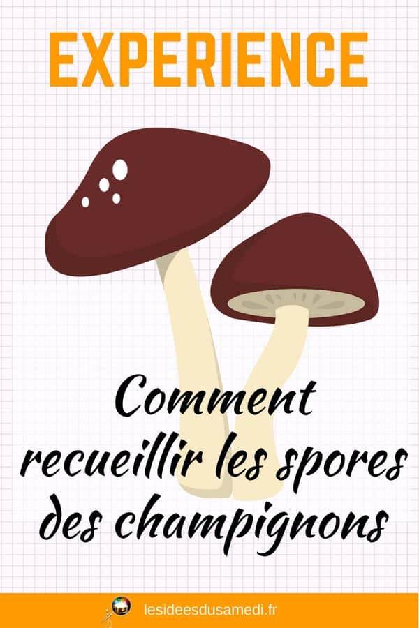 experience champignons