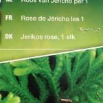 photo catalogue lesideesdusamedi