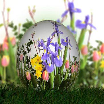 Découvrez qui apporte vraiment les oeufs ! #Pâques