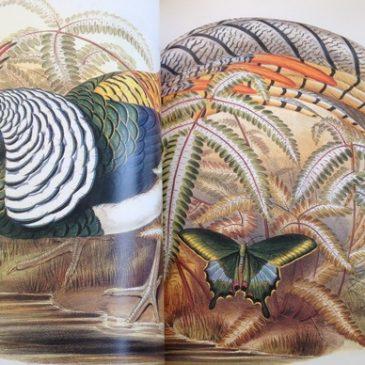 Les oiseaux exotiques de John Gould #rdvnature #lecture