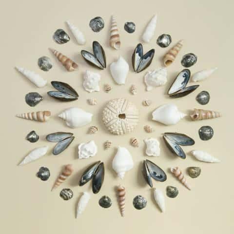 seashells htta.org