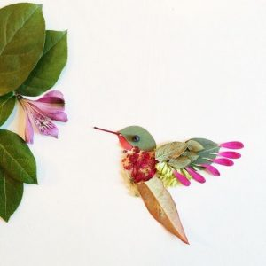 colibri fleur floraforager