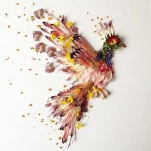 pigeon fleur floraforager