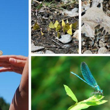 Les petites bêtes du jardin et de la nature sauvage [Rdv Nature]