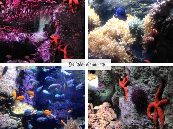 aquarium paris trocadero