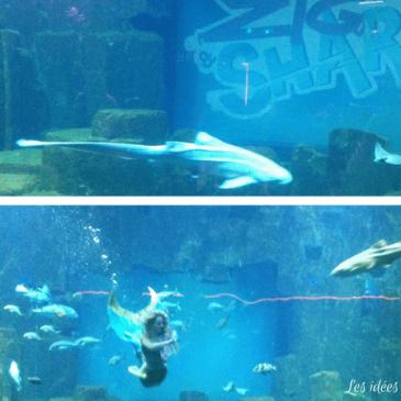 Visite à l'Aquarium de Paris avec Zig et Sharko