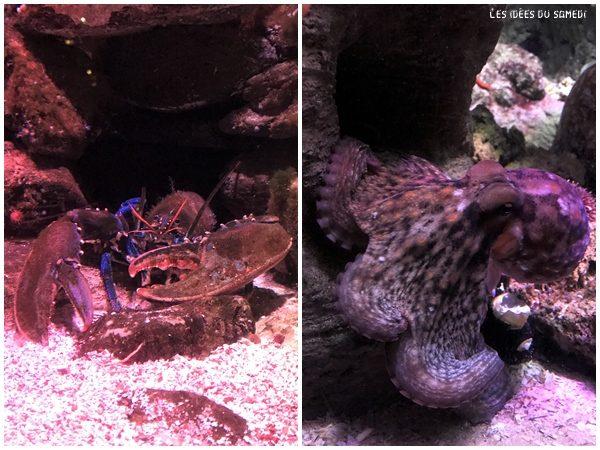 poulpe homard aquarium paris