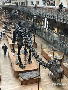 arsinoitherium squelette dinosaure paris