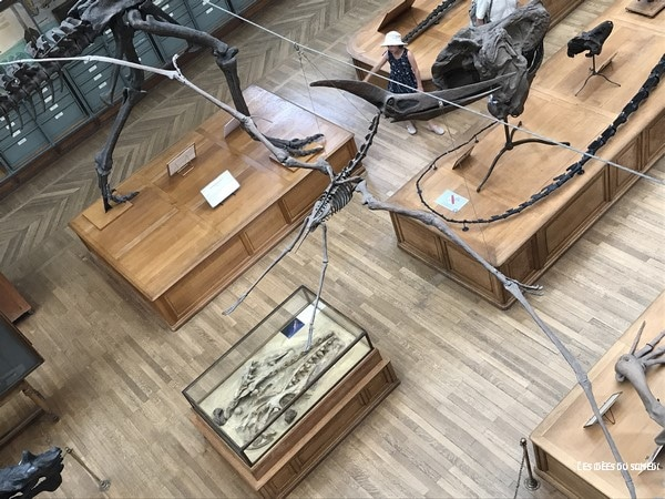 pterosaure dinosaure volant paris