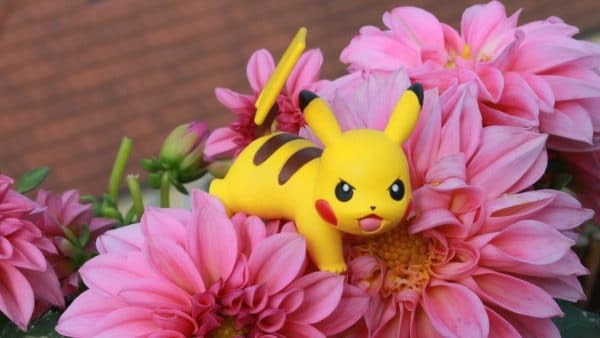 faire chasse au tresor pokemon
