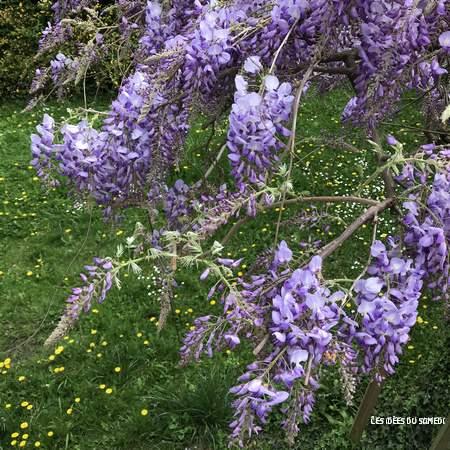 glycine-allergie-pollen