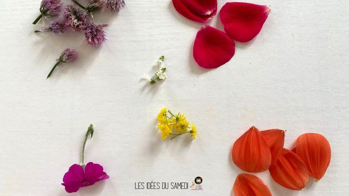 petales fleurs pour faire papillon